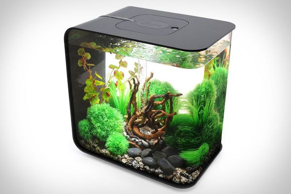 Biorb Flow Aquarium